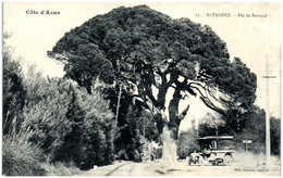 83 SAINT-TROPEZ - Pin De Bertaud - Saint-Tropez