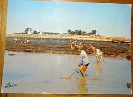 56 Morbihan CPSM  CPM Damgan Kervoyal La Pêche  1967 - Damgan