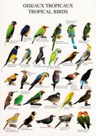 OISEAUX TROPICAUX - Birds
