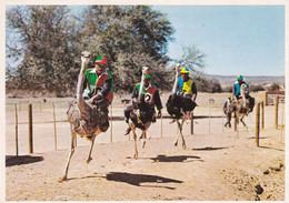 (ST324) - OUDTSHOORN (Sudafrica) - Gara Di Velocità Tra Struzzi In Una Fattoria Di Allevamento - Südafrika