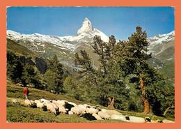 A538 / 175 Suisse ZERMATT Riffelalp Mit Matterhorn ( Mouton ) - Zonder Classificatie