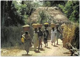 CP SENEGAL - Retour Des Rizières - Photo M. Renaudeau N°1022 - Sénégal