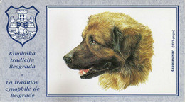 Dogs,Illyrian Shepherd Dog / Šarplaninac - Dog Breed - Perros
