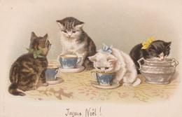CPA Lithographiée Animal Chat Cat Catze Chaton Buvant Dans Une Tasse Illustrateur (2 Scans) - Cats