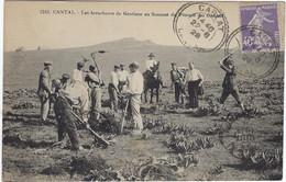 15  Plomb Du Cantal Les Arracheurs De Gentiane  Au Sommet Du Plomb De Cantal - Altri Comuni