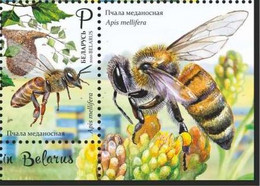 Belarus 2020 - Beekeeping Honey Bee. Ape Honigbiene Bij Biene Abeille Bielorussia/Biélorussie/Wit-Rusland/Weißrussland - Honeybees