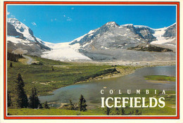 Jasper - Parc National De Jasper - Champ De Glace Columbia - Jasper