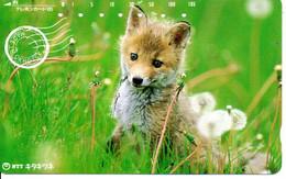 Renard  Fox  Télécarte Phonecard Japon Animal (D 761) - Telefoonkaarten