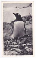 776 DIEPPE Laboratoires LA BIOMARINE FALKLAND Pingouin Carte PUB Médicament Postée De Port Stanley 1952 VOIR TIMBRE - Falkland Islands