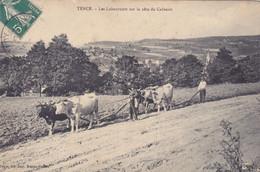 (8)   TENCE - Les Laboureurs Sur La Côte Du Calvaire - Zonder Classificatie