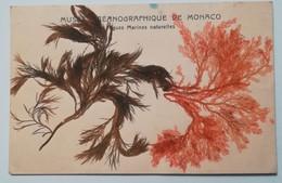 MONACO - ALGUES MARINES NATURELLES - MUSEE OCEANOGRAPHIQUE - Otros