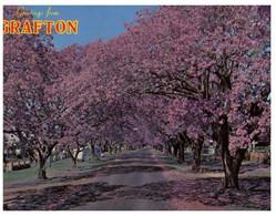 (U 1) Australia - NSW - Grafton Jacaranda Trees (3851) - Australië