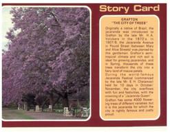(U 1) Australia - NSW - Grafton Jacaranda Trees (GF1) Sotry Card - Australië