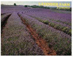 (U 1) Australia - TAS - Nabowla Lavender Farm (with Butterfly Stamp) - Australië