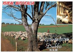 (U 1 A) Australia -  NSW - Dubbo Sheep Farming (top Of Card Shorten)   W635A - Dubbo