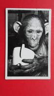 Wiener Prater TIERGARTEN-2 Postcards - Monkeys
