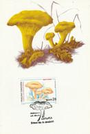 ANDORRE ESPAGNOL CARTE MAXIMUM 1993 CHAMPIGNON - Covers & Documents