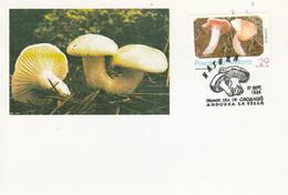 ANDORRE ESPAGNOL CARTE MAXIMUM 1994 CHAMPIGNON - Covers & Documents