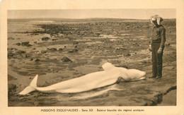 REGIONS AUSTRALES  Baleine Blanche échouée (missions Esquimaudes Série XII) - Autres