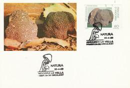 ANDORRE ESPAGNOL CARTE MAXIMUM 1996 CHAMPIGNON - Covers & Documents