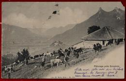 CPA Switzerland Pâturage Près De Gruyères (IT#557) - FR Fribourg