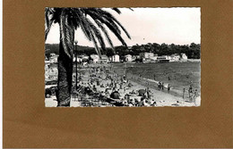 Carte Photo Toulon Et Ses Environs Les Sablettes La Plage,pub Coca Cola Sur Palmier - Photos