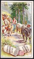 CHROMO Chocolat SUCHARD  Vaches  Cows      Serie 206 - Suchard