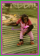 CPSM - 50 - ZOO DE LESSAY - Agathe La Guenon - Singe Monkey - Andere Gemeenten
