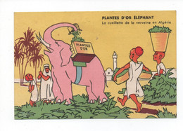 """""""Thé  Del éléphant  """"  Plantes  D,or  éléphant  -  La  Cueillette  De  La   Verveine  En  Algerie  -  Illustration - Werbepostkarten"""