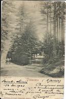 VIZZAVONA  - La Forêt (1900) - VENTE DIRECTE X - Autres Communes
