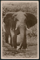1937 South Africa. Murchison Falls Uganda Elephant Postcard. Empire Exhibition Johannesburg First Day Airmail - Posta Aerea