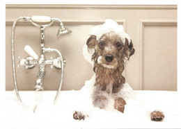 (ANIMALI) CANE INSAPONATO NELLA VASCA , DOG IN THE BATHTUB - New Postcard - Hunde