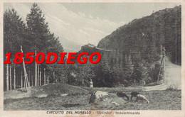 CIRCUITO DEL MUGELLO - TRIGNALI - IMBOSCHIMENTO F/PICCOLO VIAGGIATA ANIMAZIONE - Firenze