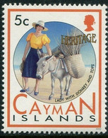 Iles Cayman - Dame à L'âne - Donkeys