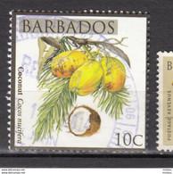 Barbade, Barbados, Noix De Coco, Coconut, Palmier, Palmtree, Fruit, Alimentation - Fruits