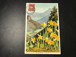 EN CHARTREUSE Jonquilles - 1943 Timbrée (Petain) - Chartreuse