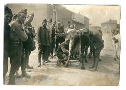WW2 Photo Amusante Miltaires Occupés à La Traite De Vaches - Guerra, Militari