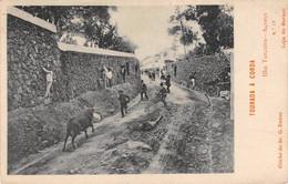 CPA - ACORES,  Ilha Terceira Acores Tourada A Corda, 1909 - Açores