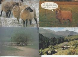 6 Cartes Thème MOUTON Moutons - Tous Formats - Other