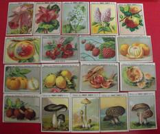 18 Images Produits Jeannette. Lot 274. Album Vie. Champignons Fruits Fleurs. Vers 1960. - Otros