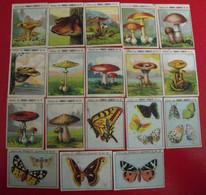 18 Images Produits Jeannette. Lot 276. Album Vie. Papillons Champignons. Vers 1960. - Otros