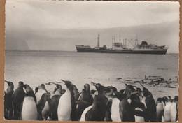 Cpsm T.A.A.F. Archipel Des Crozet Le M/S Gallieni Vu De La Plage De Port-Alfred (Ile De La Possession ) - TAAF : Territori Francesi Meridionali