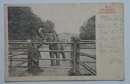 Austria 349 Wien 1901 Schonbrunn Elephant - Castello Di Schönbrunn