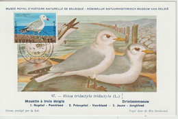 Chypre Carte Maximum Oiseau 1969 Goéland 315 - Storia Postale