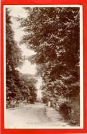 ESSEX   LEIGH ON SEA   ELM ROAD  RP Pu 1929 - Southend, Westcliff & Leigh