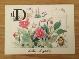 ALPHABET DE LA NATURE MONIQUE TOUVAY 11 CARTES LETTRES D I K H O Q S U V W X - Autres Illustrateurs