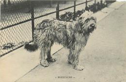 LE CHIEN MOUSTACHE GRIFFON - Dogs