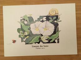LE GRAND HERBIER LISERON DES HAIES LES FLEURS DES CHAMPS MONIQUE TOUVAY - Autres