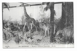 Bourges Muséum D' Histoire Naturelle Girafe - Bourges