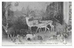 Bourges Muséum D' Histoire Naturelle Antilopes Et Daim - Bourges